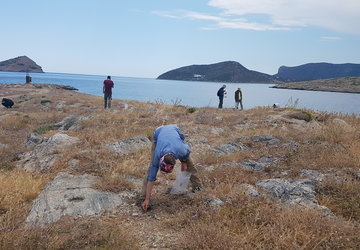 Grace Erny collects lithics on the site of Pounta during the Bays of Eastern Attica Regional Survey