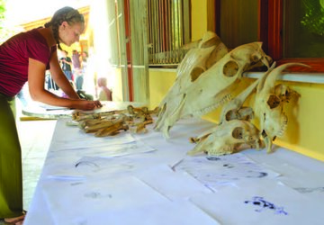 Kierstyn Smith ('15) participates in a zooarchaeological activity